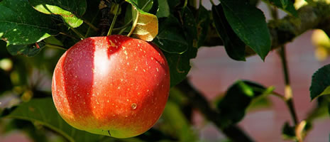 Commercial Tree Fruit School