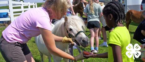 4-H Animal Science Camp