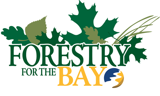 forestry for the bay2