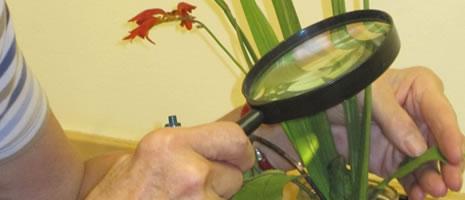 Plant Problem Diagnostics (PSU - N. Knauss)