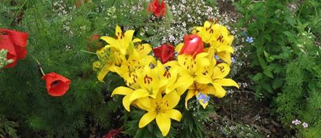 Master Gardener Smart Gardening Workshop (2)
