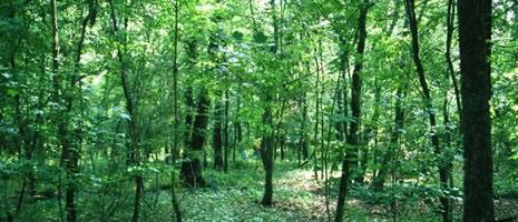 Forest Landowner Conference