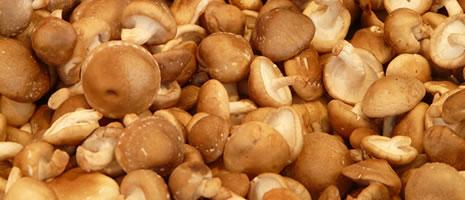 Shittake Mushroom School - Hans - pixaby.com