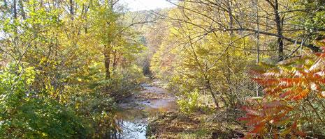 Laurel Haven Stream (D Jackson PSU)