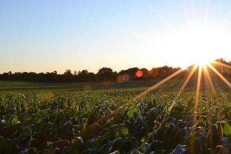 Grain Crop Production Series 450x300