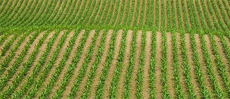 Crops Conferences (PSU)