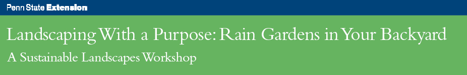 Landscaping With a Purpose: Rain Gardens in Your Backyard