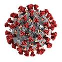 Coronavirus-pic