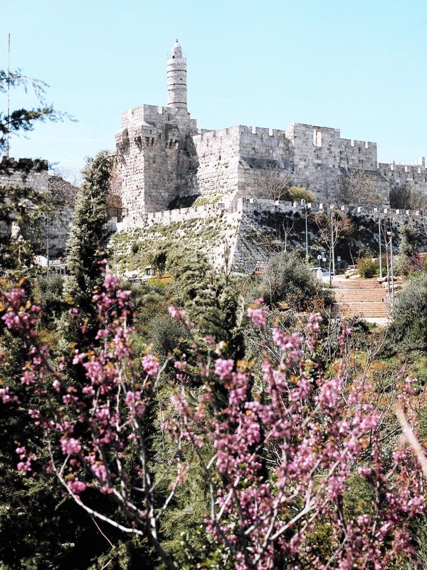 King Davids Citidel 7657465CA